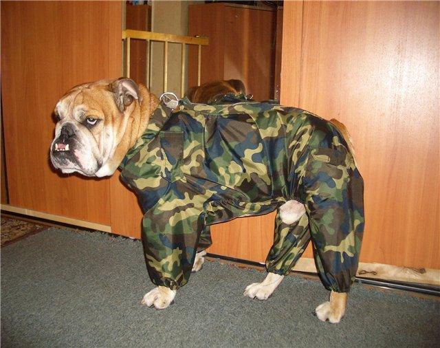 как сшить комбинезон для собаки. выкройка комбинезона для собак