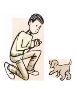 тест на привлечение, тест на стоячую позу, тест для проверки того, насколько легко щенок подчиняется доминированию, тест на проверку того, насколько легко щенок воспринимает ограничение, тест на способность следовать