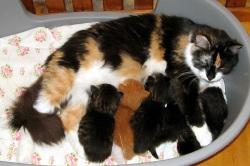 17 апр 2011 кошка родила двойню один