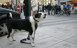 собачий лай, что означает собачий лай, почему собака лаит, звуковые сигналы у собак