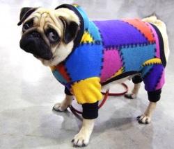 Дог мода каталог одежды для собак