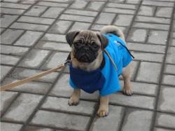 Выкройки Одежды Для Собак Такса