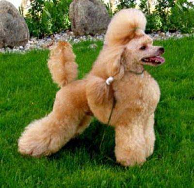 смотреть онлайн дикие собаки.