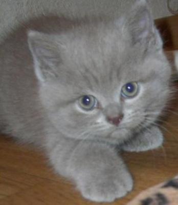 Котики и кошечки (30 фото)